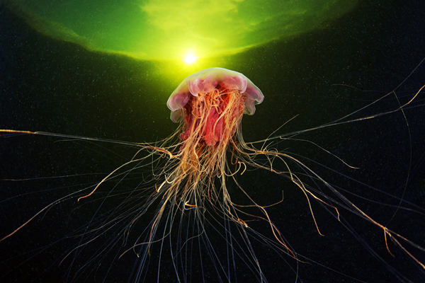 Jellyfish Madness by Alexander Semenov (3)