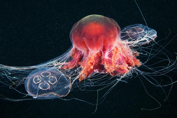 Jellyfish Madness by Alexander Semenov (7)