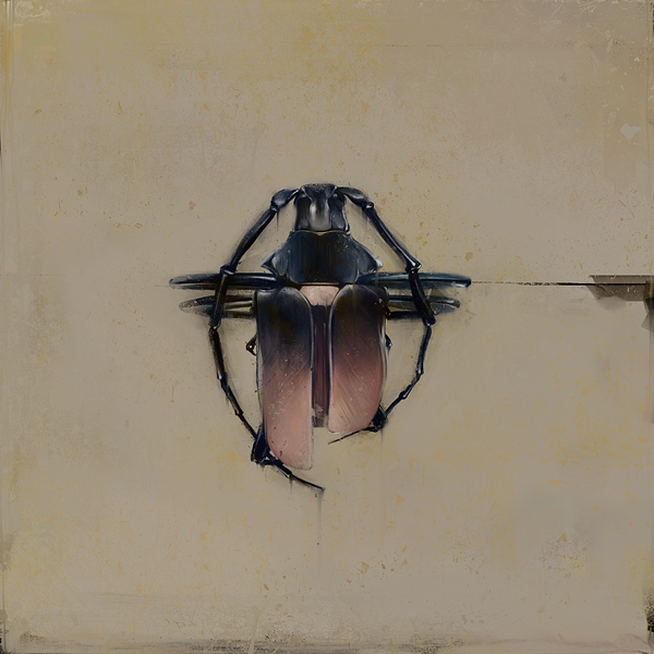 beetles 3 Outstanding Digital Art by Denis Gonchar