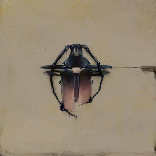 Beetles (3)
