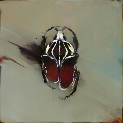 Beetles (4)
