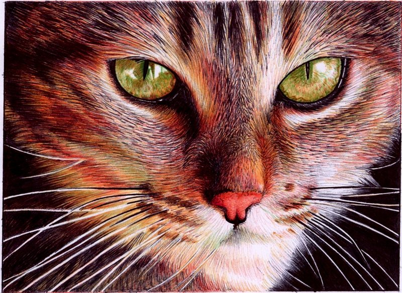 cat face   bic ballpoint pen by vianaarts d4n9hyy1 Photo or Pen? Photorealistic Artwork by Samuel Silva