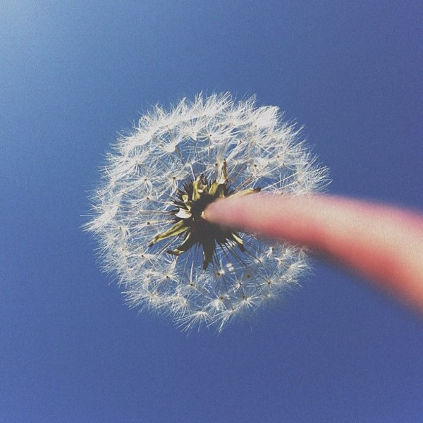 dandy Conceptual iPhone Photography from Brock Davis