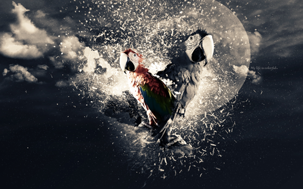 Create a Stunning Parrot Photo Manipulation in Photoshop