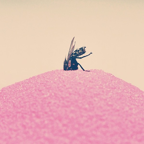fly Conceptual iPhone Photography from Brock Davis