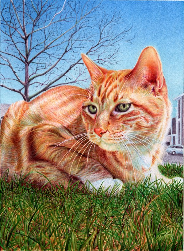 ginger cat   ballpoint pen by vianaarts d4z3sg31 Photo or Pen? Photorealistic Artwork by Samuel Silva