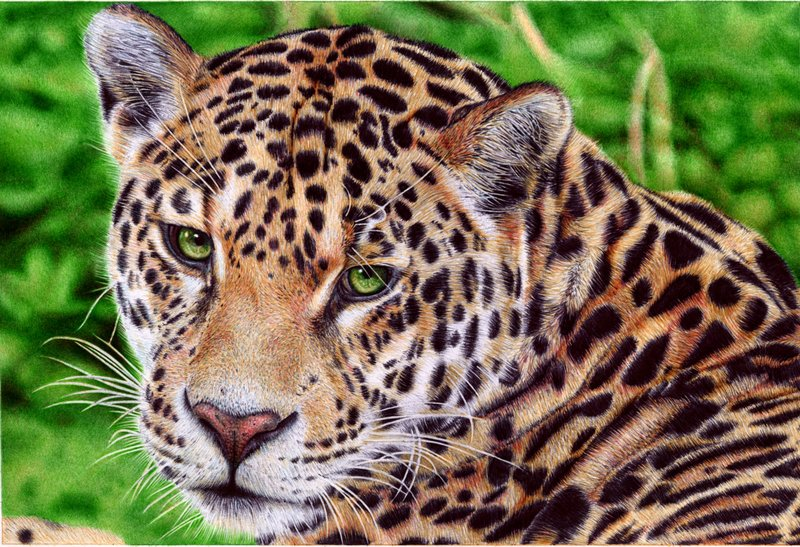 jaguar   ballpoint pen by vianaarts d51wc8w1 Photo or Pen? Photorealistic Artwork by Samuel Silva
