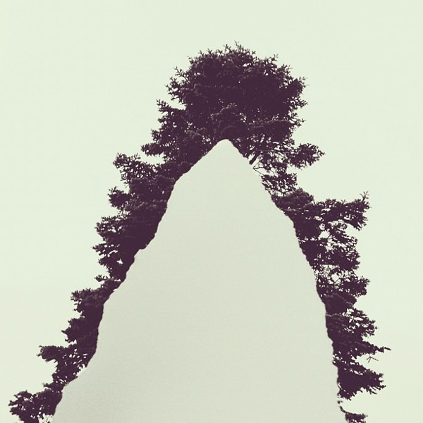 torn paper held up over pine tree Conceptual iPhone Photography from Brock Davis