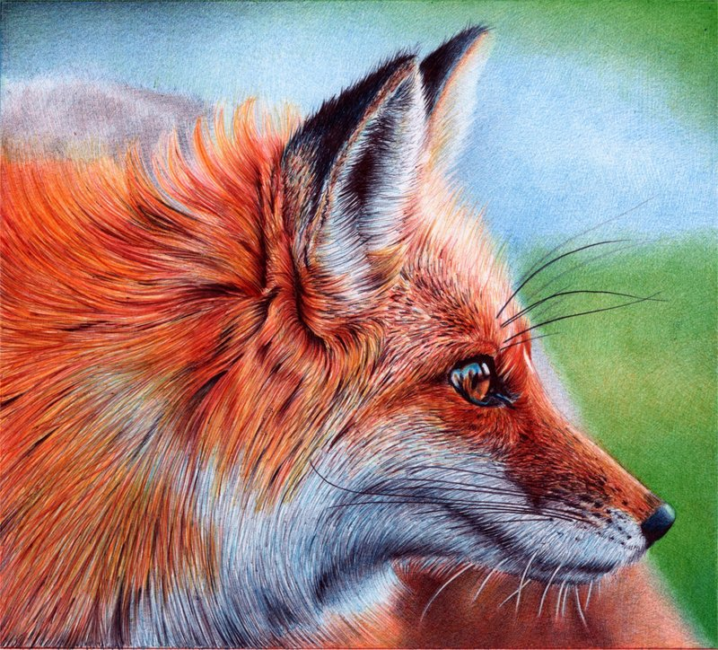 vixen   ballpoint pen by vianaarts d4v06mx1 Photo or Pen? Photorealistic Artwork by Samuel Silva