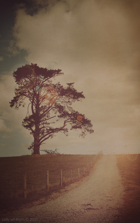 a memoir of trees 4 Rural Beginnings: Aesthetic Photography by Cally Whitham