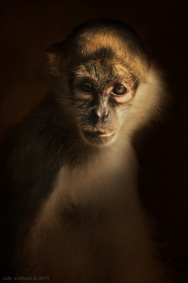 animal portraits 1 Rural Beginnings: Aesthetic Photography by Cally Whitham