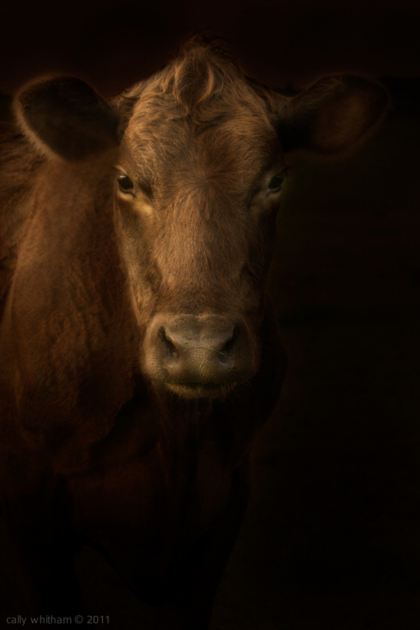 animal portraits 4 Rural Beginnings: Aesthetic Photography by Cally Whitham