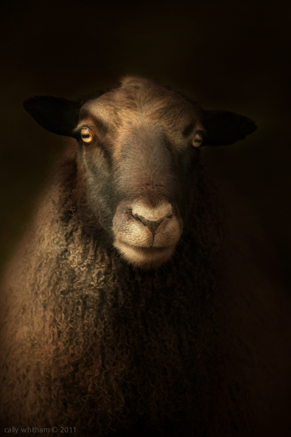 animal portraits 5 Rural Beginnings: Aesthetic Photography by Cally Whitham