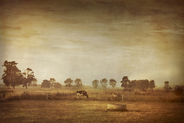 landscapes 1 Rural Beginnings: Aesthetic Photography by Cally Whitham