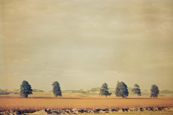 landscapes 5 Rural Beginnings: Aesthetic Photography by Cally Whitham