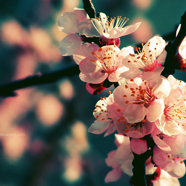 link-13-Spring_Rhapsody_Wallpaper_by_augustrush008