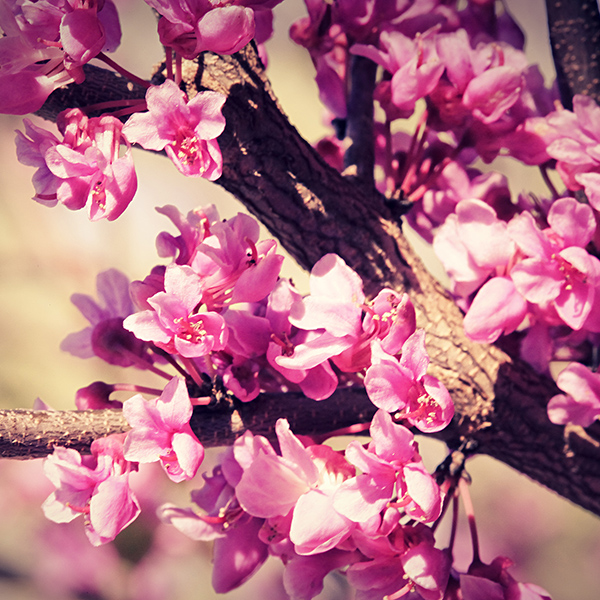 link 14 spring flowers wallpaper by venomxbaby d3dbst7 20 High Definition Spring Wallpapers