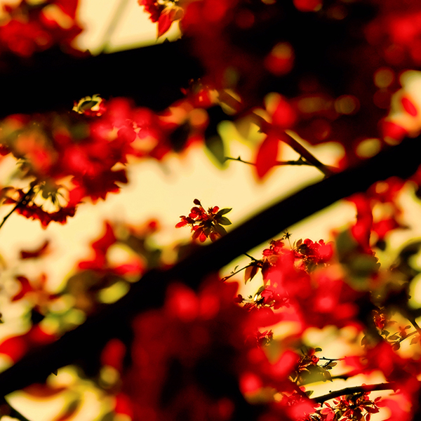 link 16 spring wallpaper by dexx83 20 High Definition Spring Wallpapers