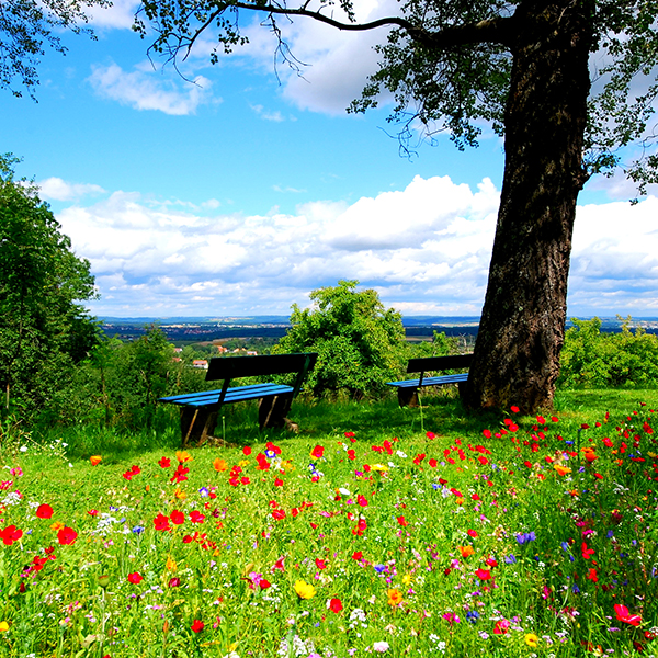 20 High Definition Spring Wallpapers Inspirationfeed