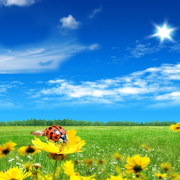 link-4-bright-spring-1366x768-wallpaper-7373