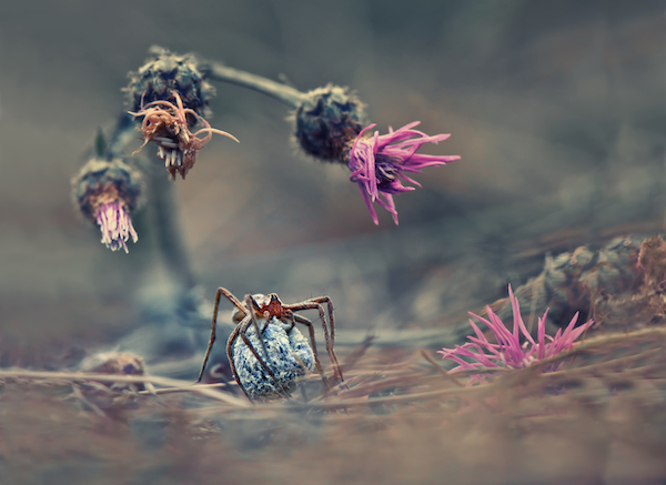 Krasimir Matarov, Bulgaria, Winner, Nature and Wildlife, Open Competition, 2013 Sony World Photography Awards