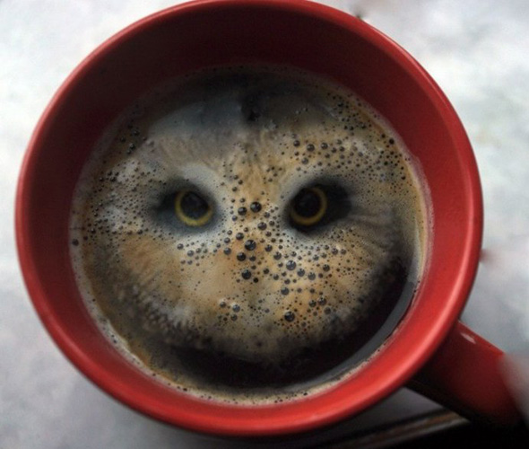 omg owl in the coffee1 30 Mighty Optical Illusions and Brain Teasers