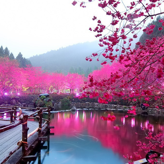 290937487 d6d51690396b1 Spring Around the World: 25 Fascinating Cherry Blossom Photos