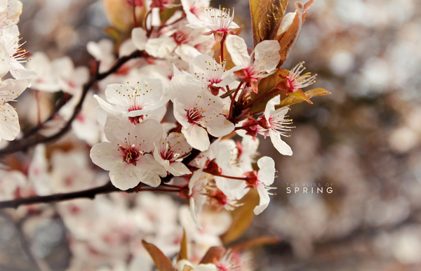 Bliss of Spring by Kro Eshi