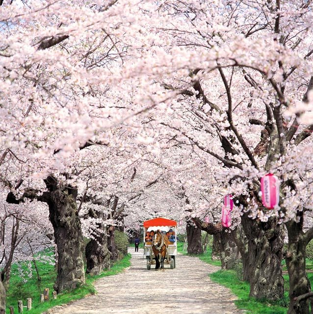 Spring Around the World: 25 Fascinating Cherry Blossom Photos