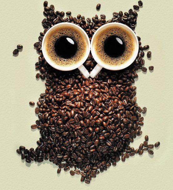 Coffee bean Owl
