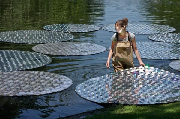CD Water Lilies