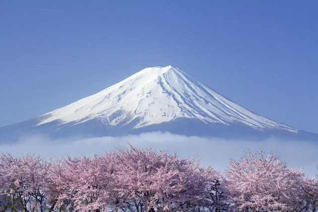 cherryblossom07 640x4261 Spring Around the World: 25 Fascinating Cherry Blossom Photos
