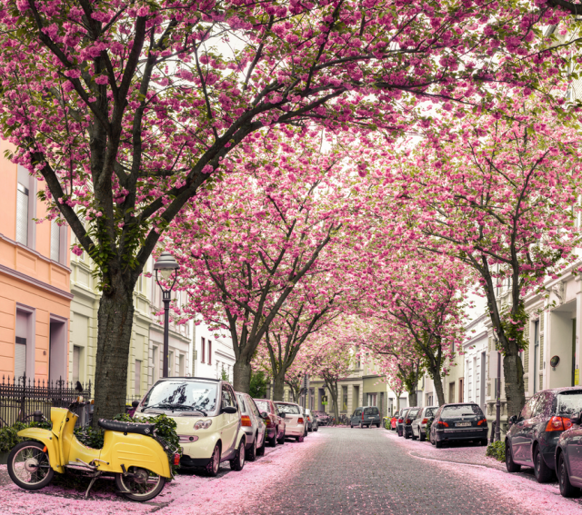cherryblossom11 640x5671 Spring Around the World: 25 Fascinating Cherry Blossom Photos