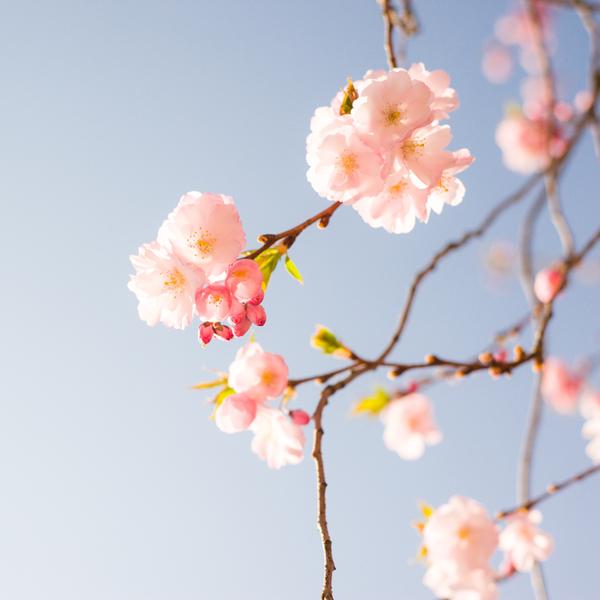 Flower Power by Florian Mueller