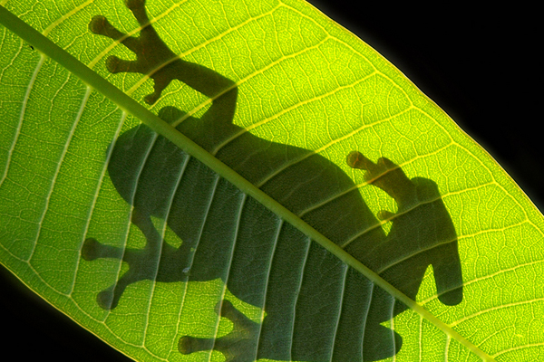 the shadow by irawan subingar 25 Remarkable Examples Of Shadow Photography