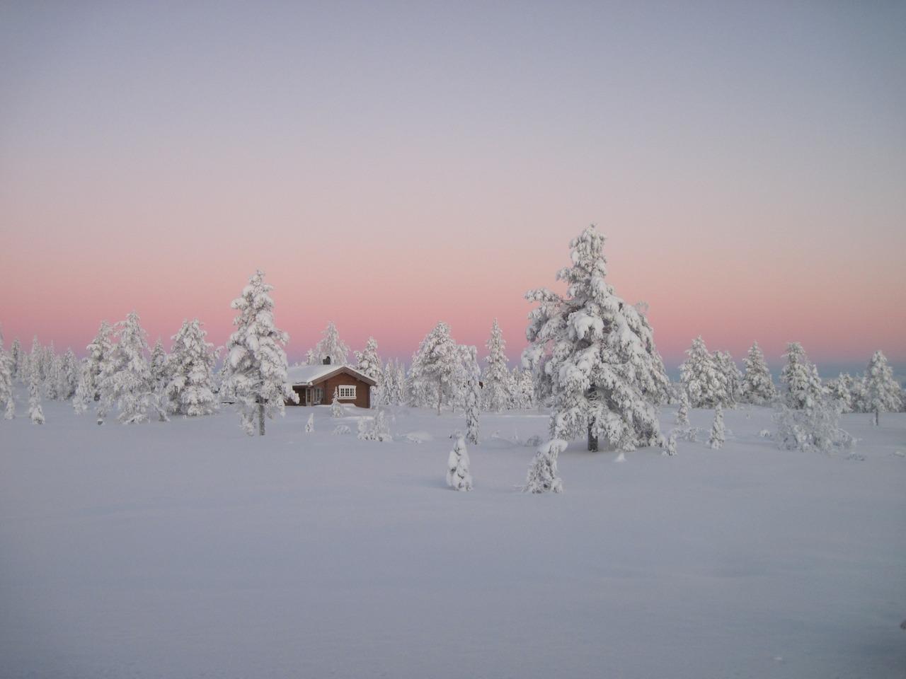 Norwegian boreal forest