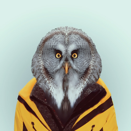 Zoo Portraits by Yago Partal (1)