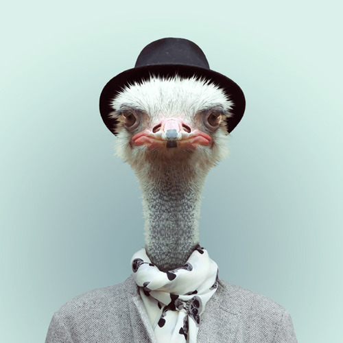 Zoo Portraits by Yago Partal (11)