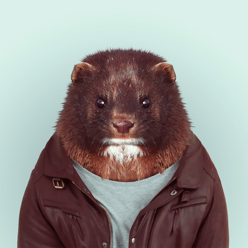 Zoo Portraits by Yago Partal (16)
