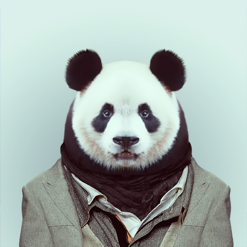 Zoo Portraits by Yago Partal (3)