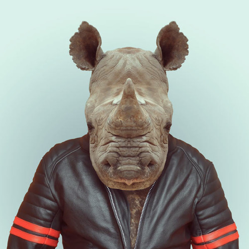 Zoo Portraits by Yago Partal (5)