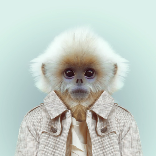 Zoo Portraits by Yago Partal (7)