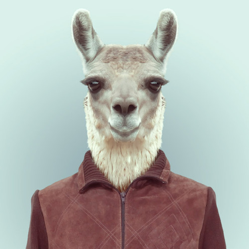 Zoo Portraits by Yago Partal (8)