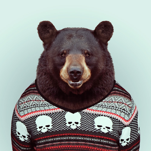 Zoo Portraits by Yago Partal (9)
