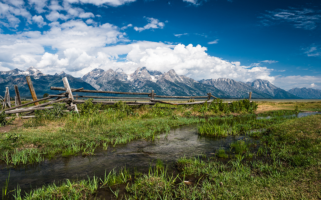 Golden Teton Meadows By Dave Elysium