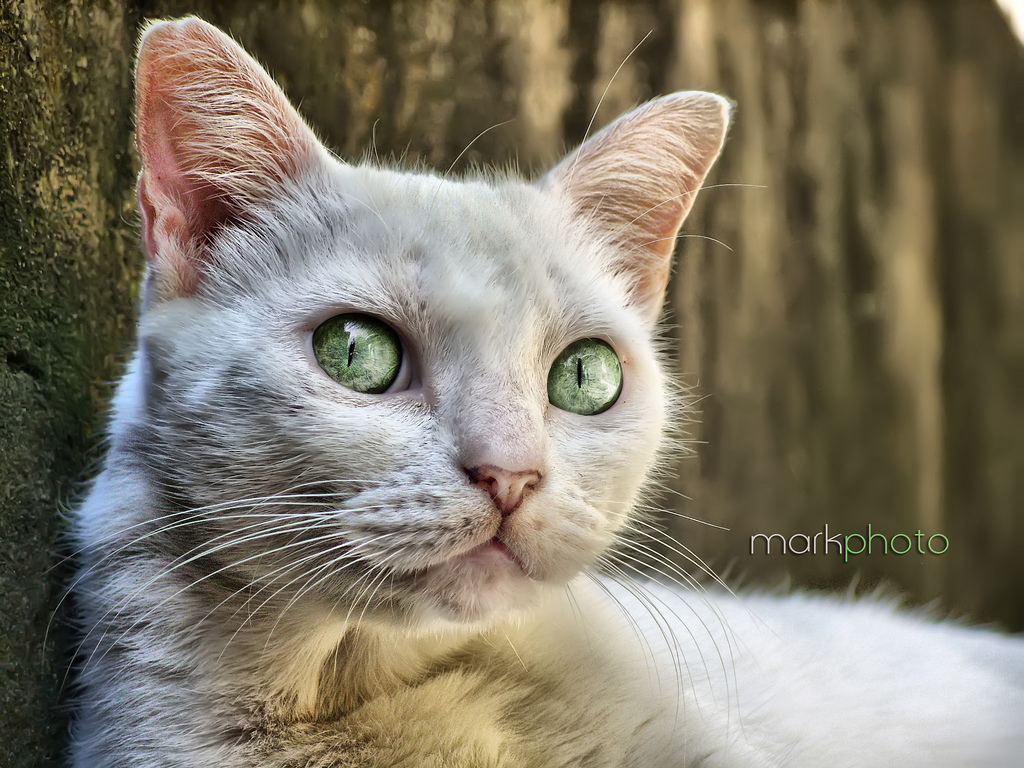 Cat HDR by Cloudown