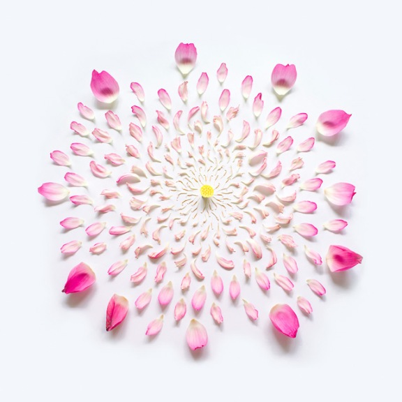 Exploded Flowers by Fong Qi Wei (7)