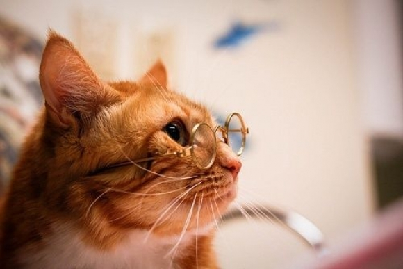 Instant Happiness-30 Cute Photos of Cats (11)