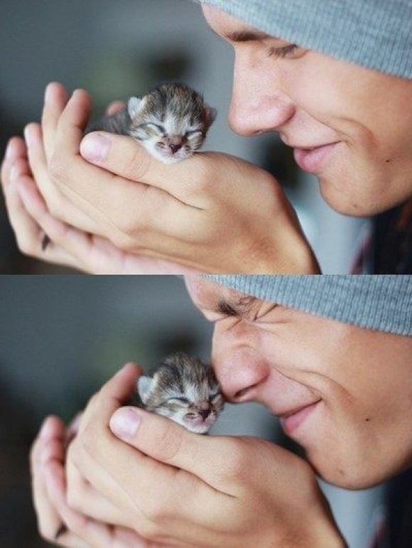 Instant Happiness-30 Cute Photos of Cats (13)