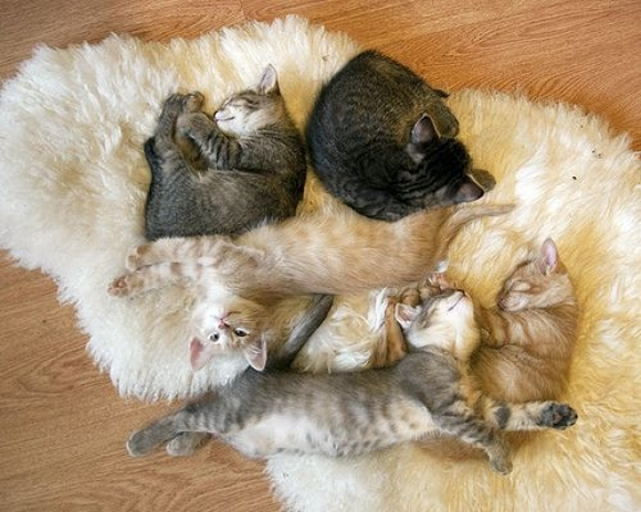 Instant Happiness-30 Cute Photos of Cats (14)